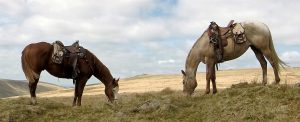 Ranch holidays, Riding Holidays, Horse Riding Dartmoor
