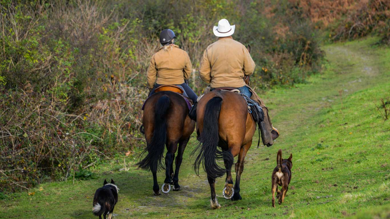 Dartmoor Horse riding holidays, cattle drives & Ranch Holidays