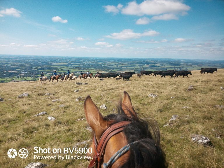 IMG 20210825 141522 9 768x576 - Cattle Drives