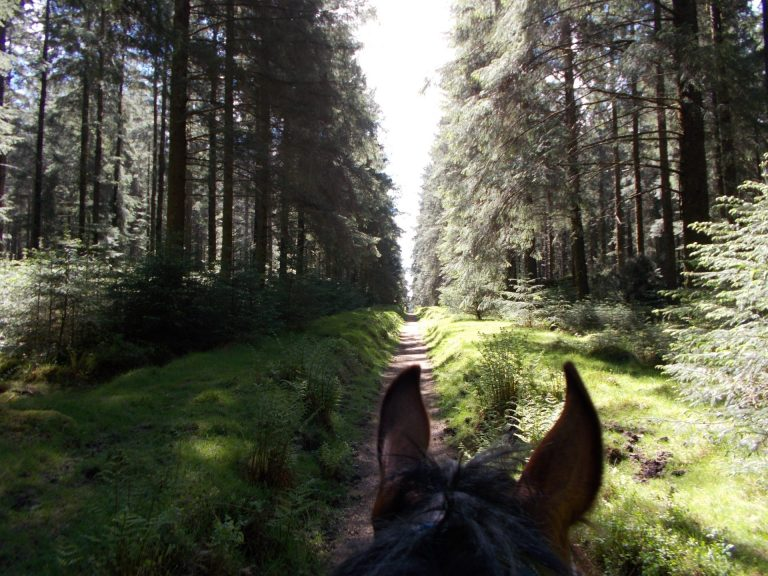 DSCN0072 768x576 - The Dartmoor Crossing